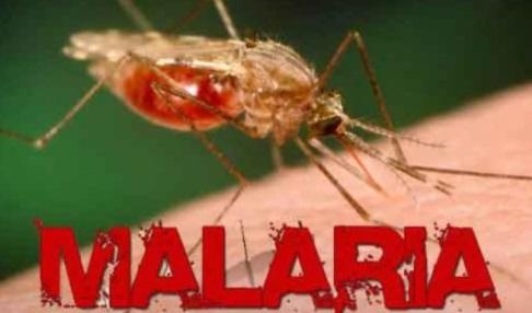Miguel Alves confirma 11 casos de Malária e passará por desinfecção.